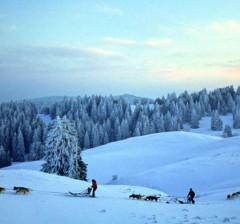 Chiens de traîneaux à Savoie Grand Revard