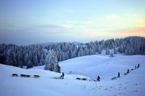 activités hiver